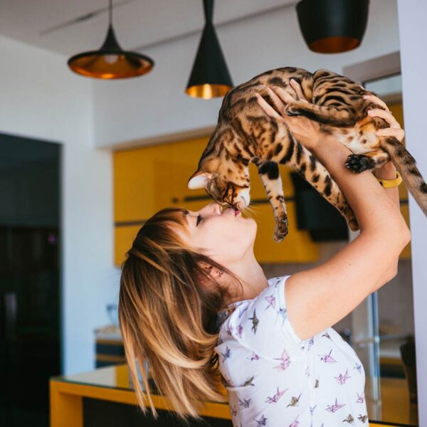 cbd pour chats
