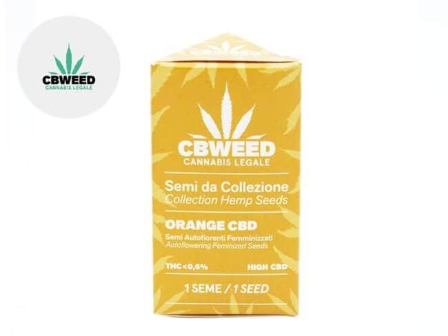 Graines Orange Bud CBD autofloraison - Cbweed