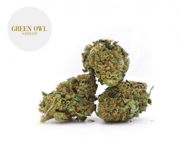 Master Haze Fleur CBD 17% Indoor - Greenowl