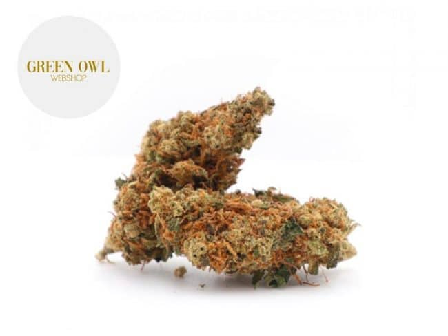 Orange Bud Fleur CBD 17% Indoor - Greenowl