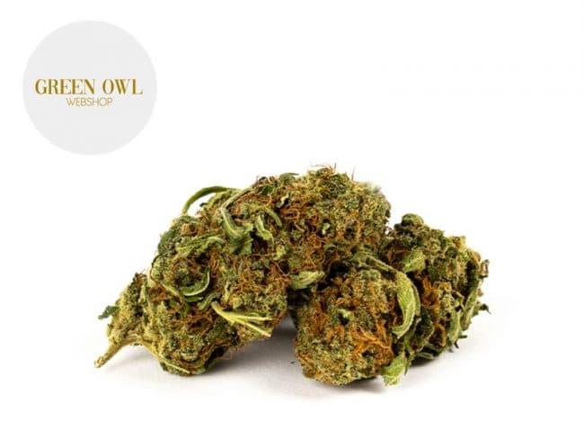 Critical Fleur CBD 13% Greenhouse - Greenowl