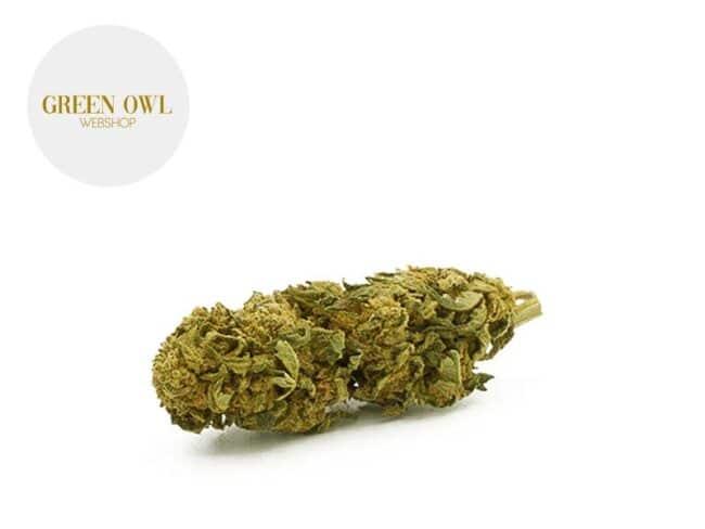 Amnesia Lemon Fleur CBD 15% Indoor - Greenowl