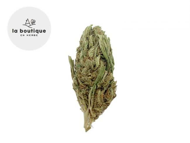 White Widow Fleur CBD 14% Indoor - La Boutique en Herbe