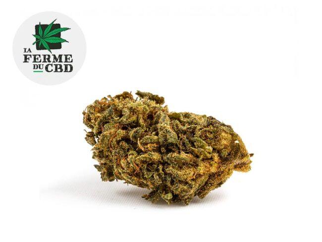 Master Kush Fleur CBD 13% Outdoor - La Ferme du CBD