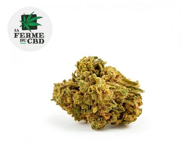 Great White Shark Fleur CBD 12% Greenhouse - La Ferme du CBD