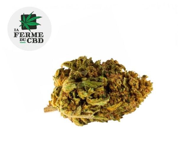 Cookie Kush Fleur CBD 17% Outdoor - La Ferme du CBD