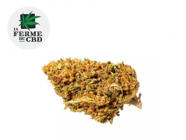 Orange Bud Fleur CBD 14% Greenhouse - La Ferme du CBD