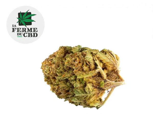 Bubble Gum Fleur CBD 15% Indoor - La Ferme du CBD