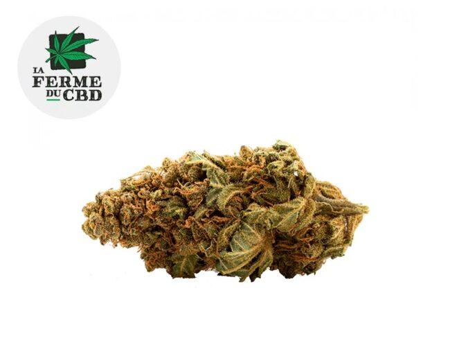 Mango Fleur CBD 14