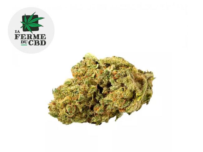 Pistachio Fleur CBD 15% Indoor - La Ferme du CBD
