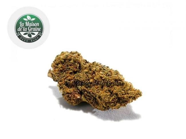 Gorilla Glue Fleur CBD 14% Indoor - La Maison De La Graine