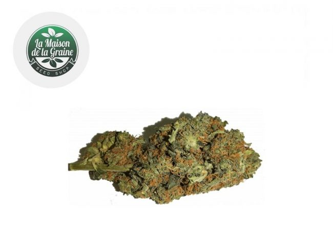 Orange Bud Fleur CBD 16% Indoor - La Maison De La Graine
