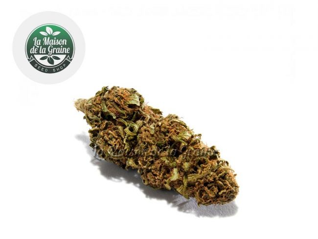 Blue Dream Fleur CBD 15% Indoor - La Maison De La Graine