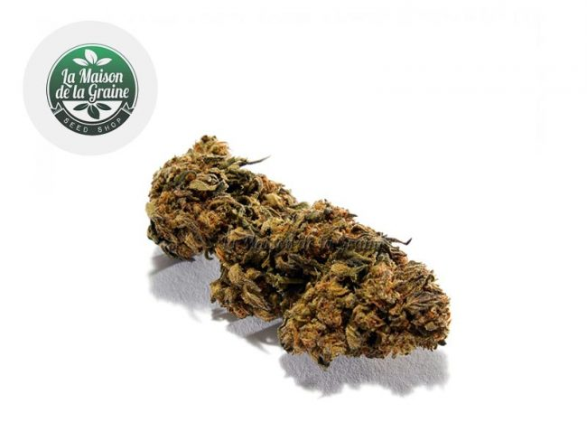 Strawberry Fleur CBD 18% Indoor - La Maison De La Graine