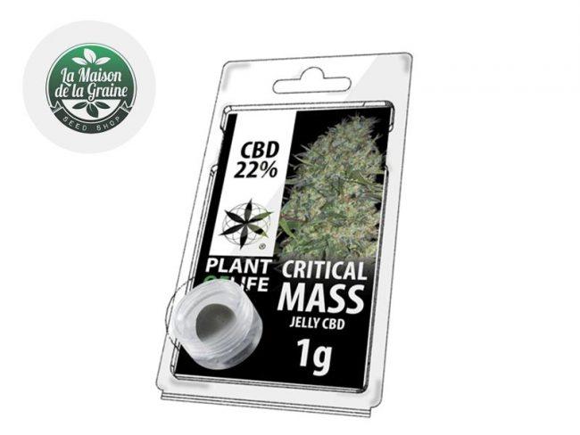 Critical Mass Résine CBD 22% - Plantoflife