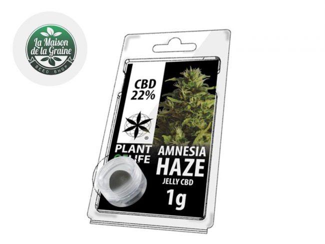 Amnesia Haze Résine CBD 22% - Plantoflife
