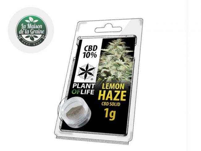 Lemon Haze Pollen CBD 10% - Plantoflife