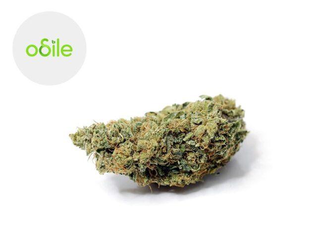 Silver Bubble Fleur CBD 5% Indoor - Odile Green