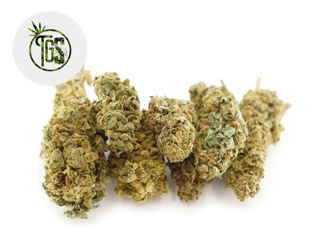 Fedtonic Fleur CBD 14% Indoor - The Green Store