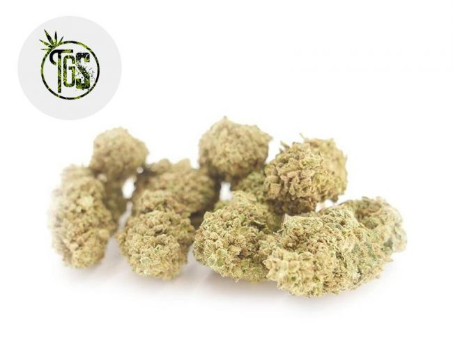 Hariboz Fleur CBD 7% Indoor - The Green Store