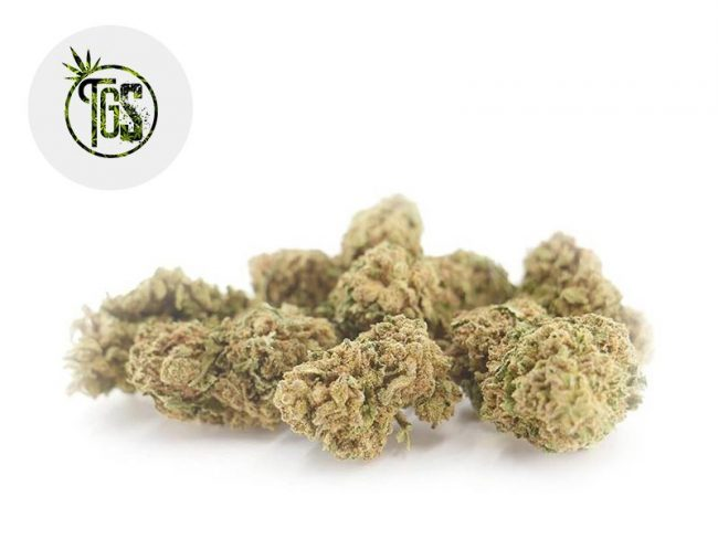 Harlequin Fleur CBD 4% Greenhouse - The Green Store