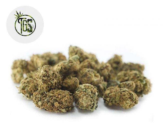 Therapy Fleur CBD 4% Outdoor - The Green Store