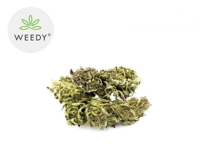 Futura 75 Fleur CBD 5% Greenhouse - Weedy