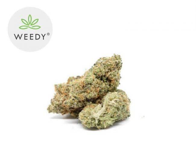Cookie Kush Fleur CBD 11% Indoor - Weedy