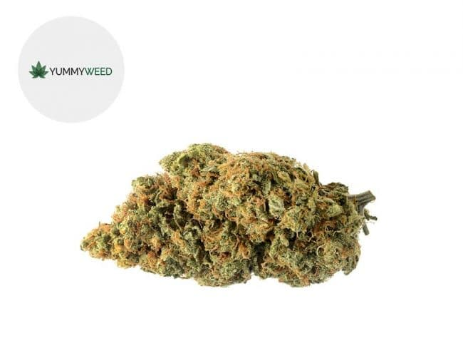 Amnesia Fleur CBD 11% Indoor - Yummyweed