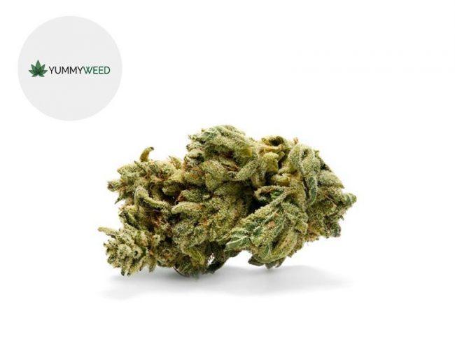 Gorilla Glue Fleur CBD 11% Indoor - Yummyweed