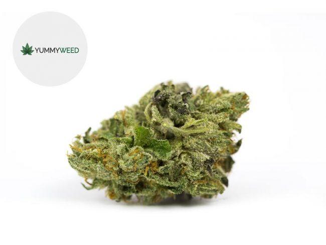 Master Kush Fleur CBD 11% Indoor - Yummyweed