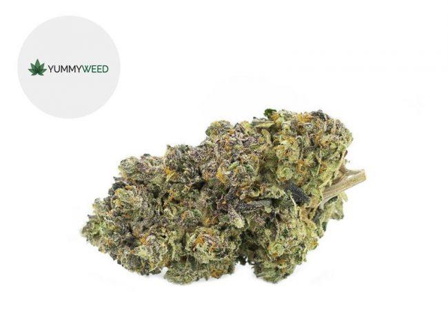 Gelato Fleur CBD 11% Indoor - Yummyweed