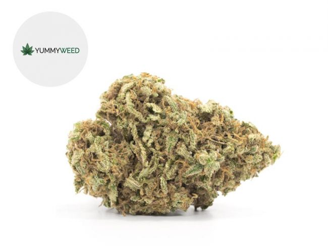 Super Silver Haze Fleur CBD 11% Indoor - Yummyweed