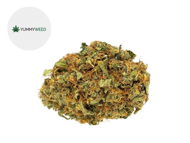 Orange Bud Fleur CBD 11% Indoor - Yummyweed