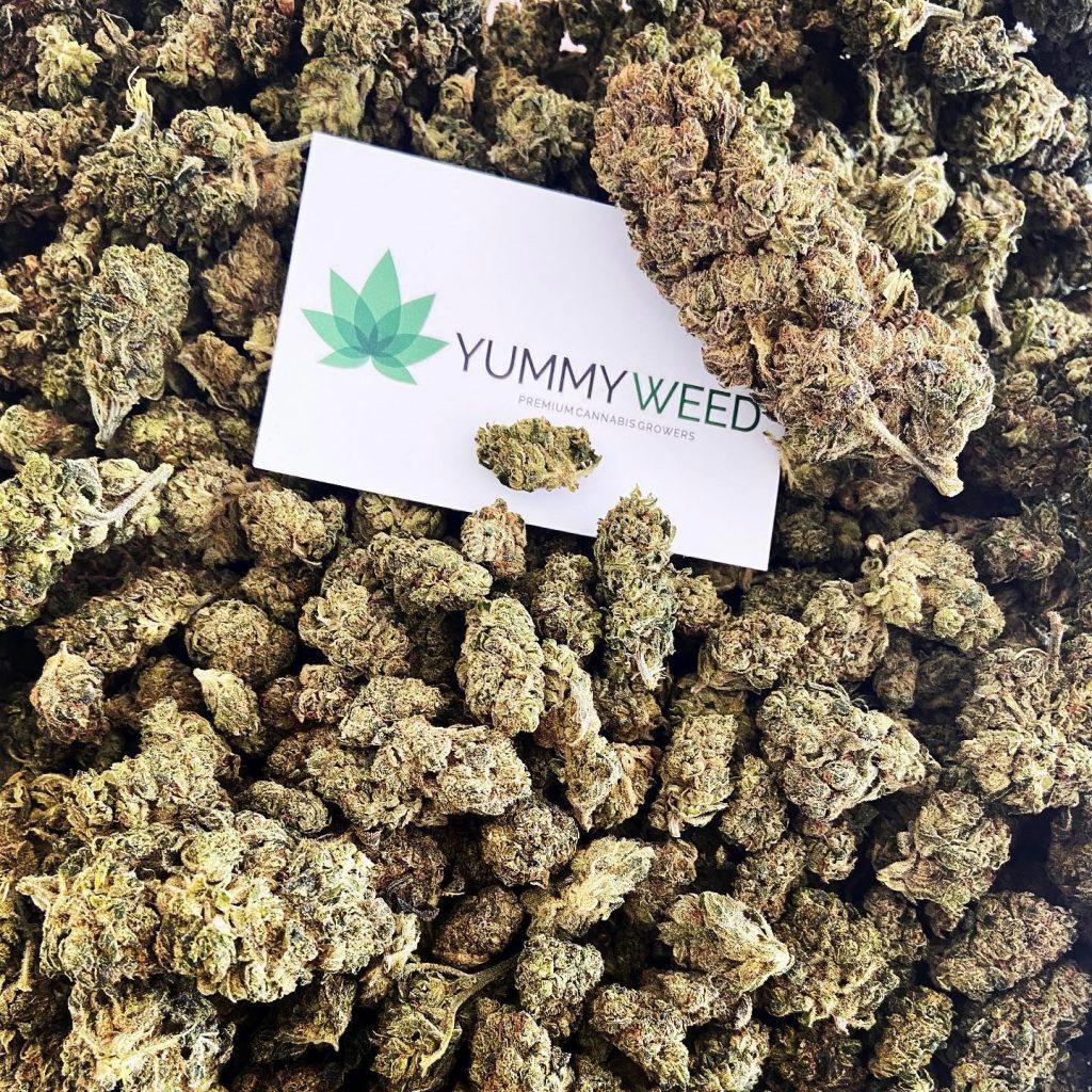 yummy weed avis